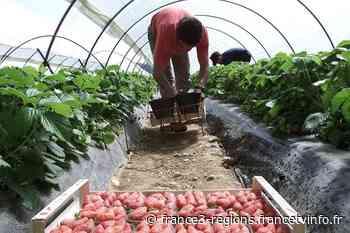 Tarascon : clusters chez des travailleurs étrangers, des entreprises agricoles assignées en justice - France 3 Régions