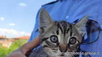 Vignola. La polizia locale salva un gattino prigioniero in un ricovero attrezzi - La Gazzetta di Modena