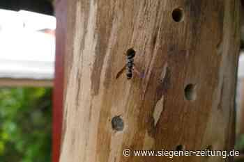Tipps für den Kauf und Bau: Insektenhotels liegen im Trend - Kreuztal - Siegener Zeitung