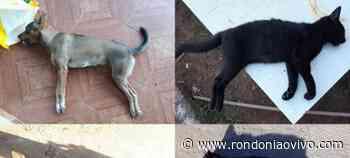 JARU: Animais encontrados mortos podem ter sido envenenados - Rondoniaovivo