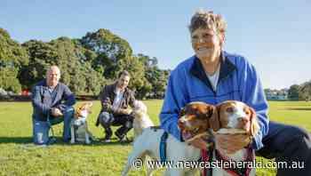 Lambton dog park: Newcastle opens public consultation on next fenced off-leash area's location - Newcastle Herald