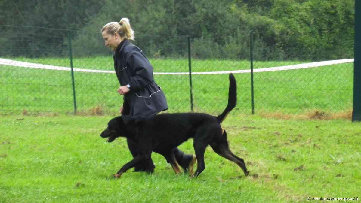 Les cours d'éducation canine reprennent à Bresles - Courrier picard