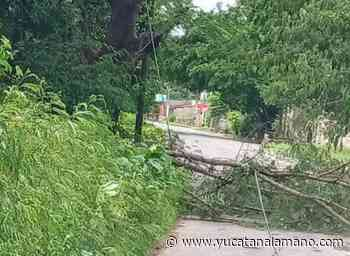 Tromba derriba árboles en Izamal – Yucatán a la mano - Yucatán a la mano
