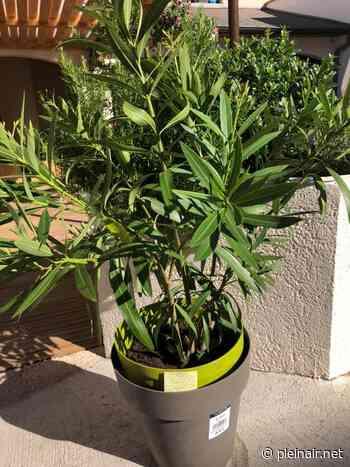 Lons-le-Saunier : Il vole une plante dans un restaurant... Puis la rend après un message sur Facebook - Plein Air
