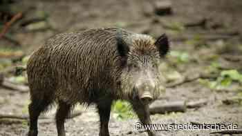 Jäger auf Wildschweinjagd löst Polizeieinsatz aus - Süddeutsche Zeitung