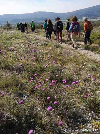 Randonnée « Plantes aromatiques et médicinales du piémont sud de Lure » Montagne de Lure dimanche 7 juin 2020 - Unidivers