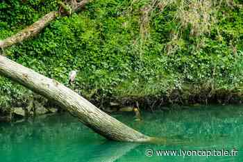 Lyon : des pompes provisoires installées sur l'un des lacs de Miribel - LyonCapitale.fr