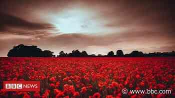 Poppies: Neighbours bid to save Keswick field from development - BBC News