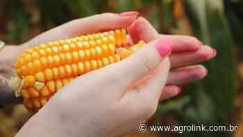 Aprosoja participa da Abertura Nacional da Colheita do Milho em Nova Mutum - Agrolink