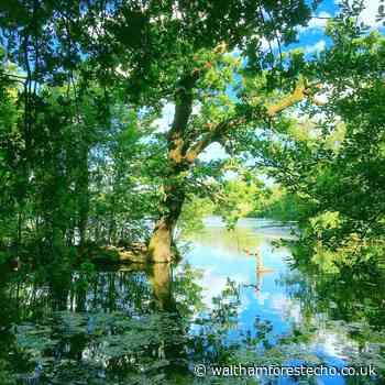 Pockets of paradise - Waltham Forest Echo