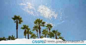 Entenda o significado espiritual da palmeira - Gospel Prime