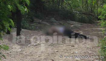 Hallan cadáver en trocha La Carbonera, Villa del Rosario - La Opinión Cúcuta