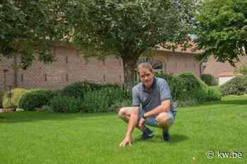 David Lannoo uit Pittem kweekt elk jaar 100 voetbalvelden aan graszoden - Krant van Westvlaanderen