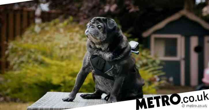 Celebrity Snoop Dogs review: Un-thrilling and deeply boring TV that does feature some very good boys