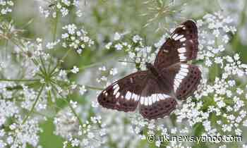 Spring sunshine brings butterfly abundance to fill 'that hole in our soul'