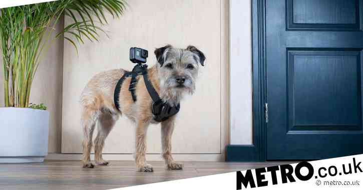 Celebrity Snoop Dogs viewers unimpressed as they compare it to canine version of Through The Keyhole