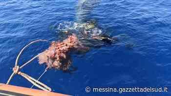 Capodoglio intrappolato dalle reti da pesca al largo di Lipari, salvato dai volontari - Gazzetta del Sud