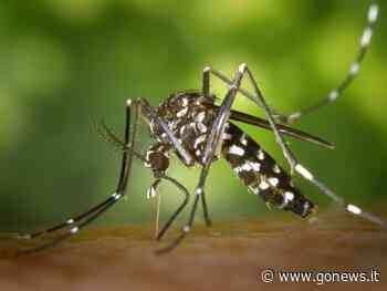 Zanzare, un incontro a Montemurlo per imparare a difendersi e a prevenire - gonews