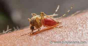 Florida funcionarios para luchar contra el coronavirus y del Oeste del Nilo: informe Noticias - TyN Panamá