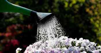 Gesunde Pflanzen: Wie oft sollte man mit Wasser giessen? - GMX.ch