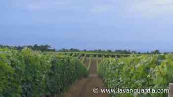 Las viñas del Piamonte - La Vanguardia