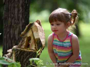 Finding fairies in the forest - Melfort Journal