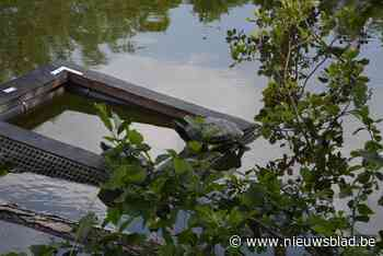 Schildpaddenvangst gesaboteerd: onbekende zet kooien open (Dendermonde) - Het Nieuwsblad