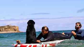 Maravilha, o cão de João Manzarra que já faz surf sozinho - Notícias ao Minuto