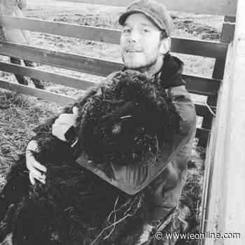 Chris Pratt Mourns the Death of His Ram Prince Rupert - E! Online