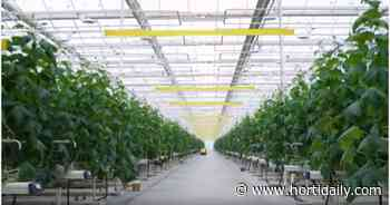 Russian grower plans 17 ha greenhouse complex in Nizhny Novgorod - hortidaily.com