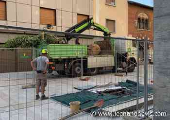 Ztl Centro Legnano, un mini-bosco in corso Magenta - LegnanoNews