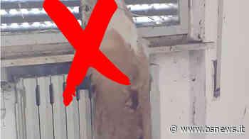 Macabra scoperta a Montichiari: cane trovato impiccato vicino all'aeroporto - Bsnews.it