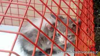 RIVAROLO CANAVESE – Gattino si incastra in un furgone; adottato dalle proprietarie (FOTO) - ObiettivoNews