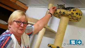 Tierschutzverein Schmallenberg kämpft mit Corona-Folgen - Westfalenpost