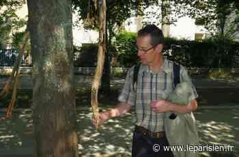 Les molosses se font les dents sur les arbres de Gennevilliers, la mairie porte plainte - Le Parisien