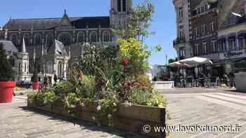 Tourcoing : un peu de verdure sur la Grand-Place - La Voix du Nord