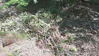 Freudenstadt: Gartenabfälle im Wald können richtig teuer werden - Freudenstadt - Schwarzwälder Bote