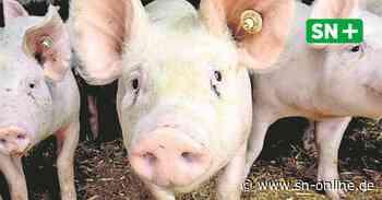 Rinteln: Fleischbetriebe zu Skandale in der Fleisch-Industrie - Schaumburger Nachrichten