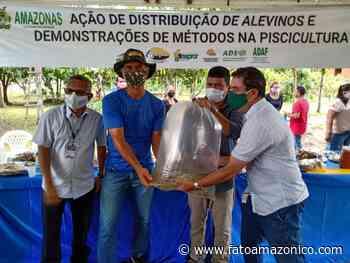 Piscicultores de Manacapuru e Careiro Castanho recebem 160 mil alevinos e 52 aeradores - Fato Amazônico