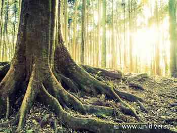 Bain de forêt au milieu des arbres remarquables Haguenau - Unidivers