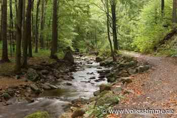 Natur: Johannistrieb gleicht Schäden aus - Volksstimme