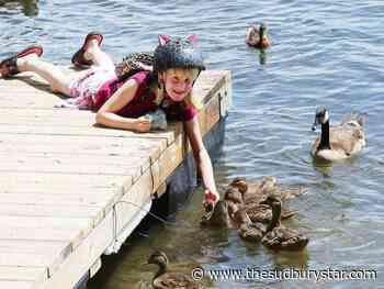 Sudbury photo: Just ducky on Ramsey Lake