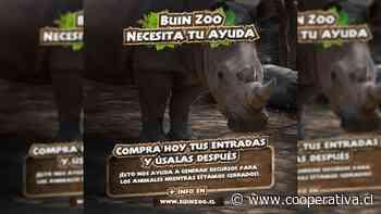[Video] Buin Zoo apela a sus visitantes para mantener a los animales durante la pandemia - Cooperativa.cl
