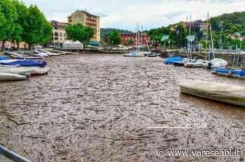 """LA FOTO. Il porto di Laveno Mombello """"invaso"""" da rami e pezzi di legno - VareseNoi.it"""