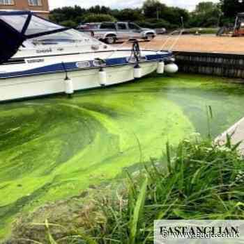 Warning for swimmers and dog owners - toxic algae in River Stour at Sudbury - East Anglian Daily Times