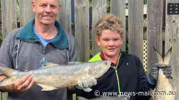 Plenty of blue salmon on the chew in Burnett River this week - News Mail