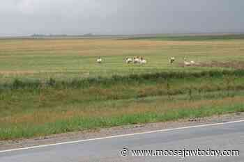 Where Can We Go: Southwest of Moose Jaw disproves flat Saskatchewan stereotype - moosejawtoday.com