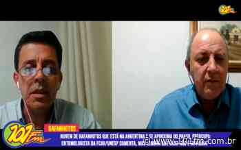 """Entomologista da FCAV/Unesp de Jaboticabal comenta sobre a """"nuvem"""" de gafanhotos que se aproxima do Brasil - Rádio 101FM"""