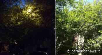 Ladispoli, lamentele in Via Fiume per i lampioni oscurati dagli alberi - BaraondaNews