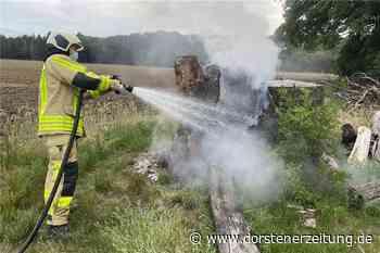 Mächtiger Buchen-Stamm brennt: Feuerwehr verhindert Schlimmeres - Dorstener Zeitung